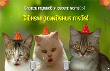 Картинка с днем рождения женщине с котом