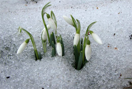 18 марта — Конон Огородник